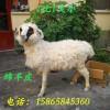 仿真山羊標本百分百真羊皮