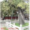 古樹防雷裝置修復工程 特種防雷資質醫院防雷接地工程 河南揚博