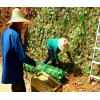植物攀爬架植物支撑网绿色钢塑土工格栅