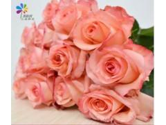 戴安娜玫瑰鲜花批发