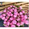 鲜花基地鲜花批发多头迷雾泡泡玫瑰