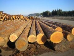 国外进口木材没有植检证可以报关吗