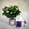 FlowerPlus——茉莉花养成攻略
